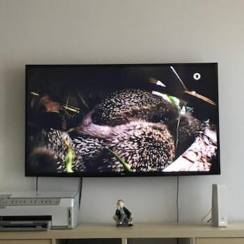 Tiere im TV